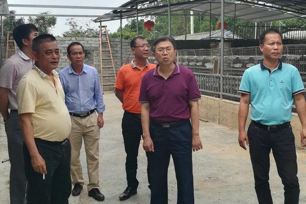 儋州市人大常委会王安仍副主任调研排浦镇人大工作